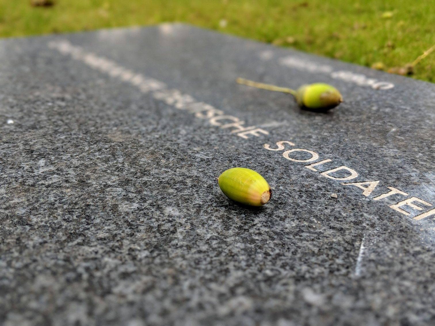 Acorns on a gravestone