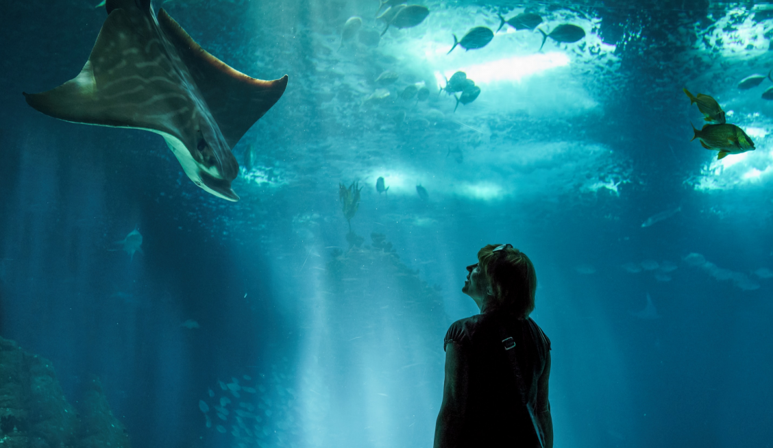A person looking at a sea creature in an aquarium