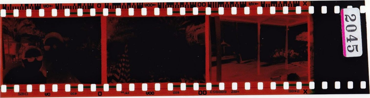 Negatives of photos from our disposable camera