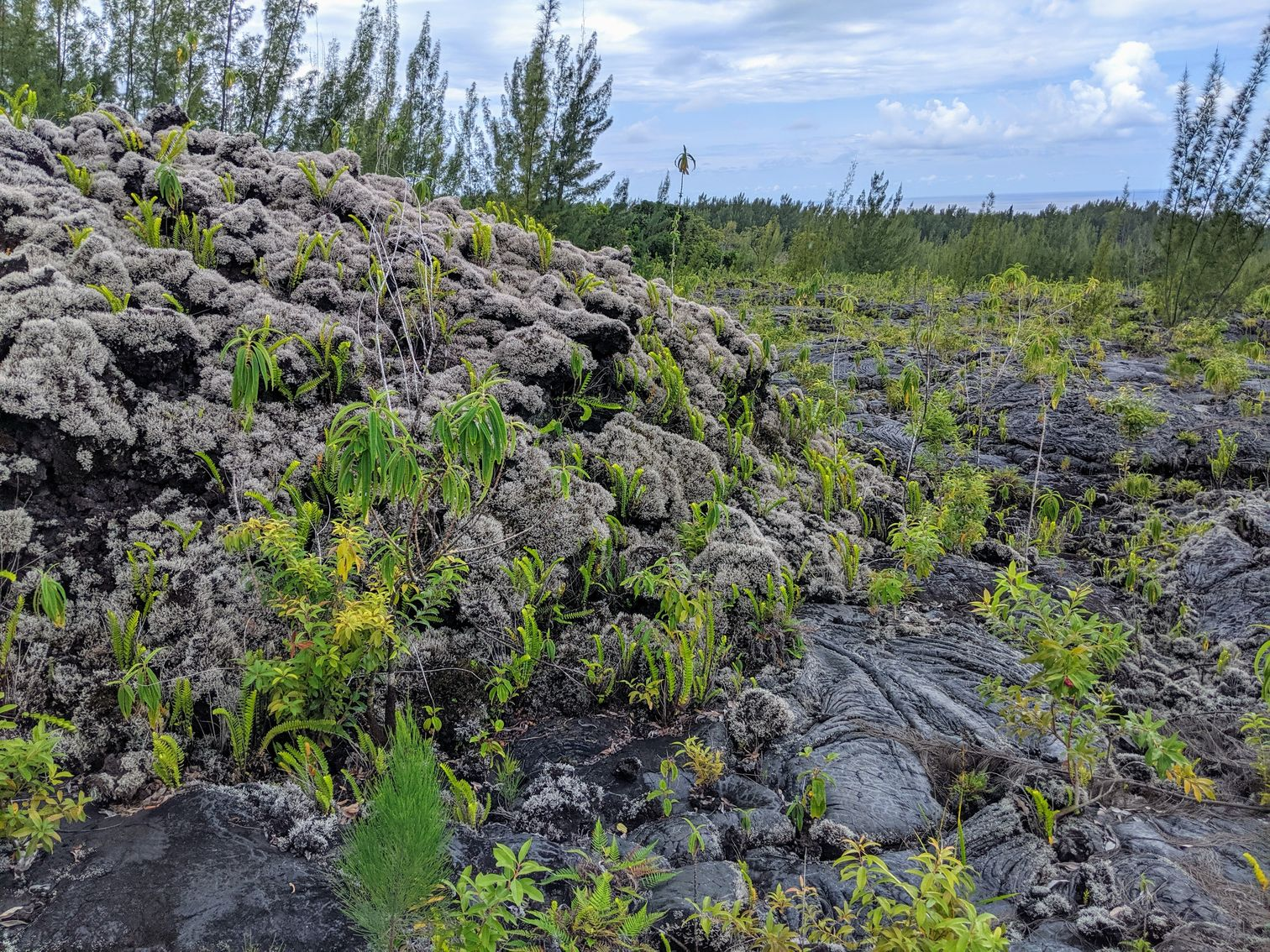 Vegetation poking through lava flow