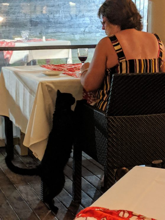 A cat pestering a restaurant guest, climbing up her chair