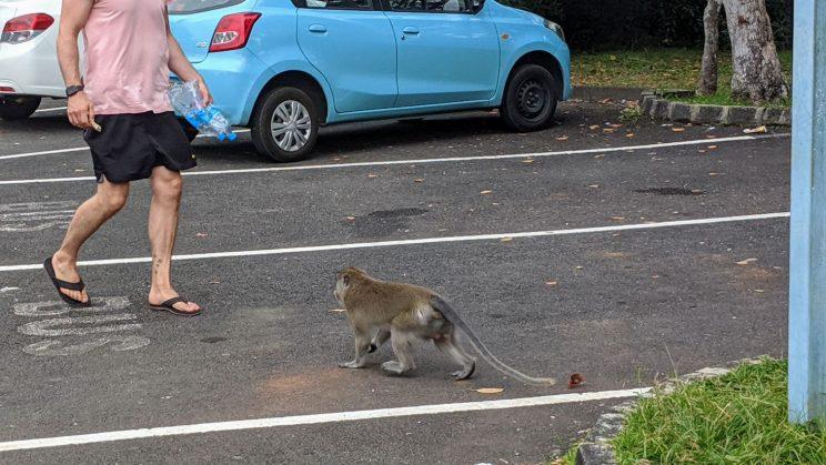 A monkey approaching a man