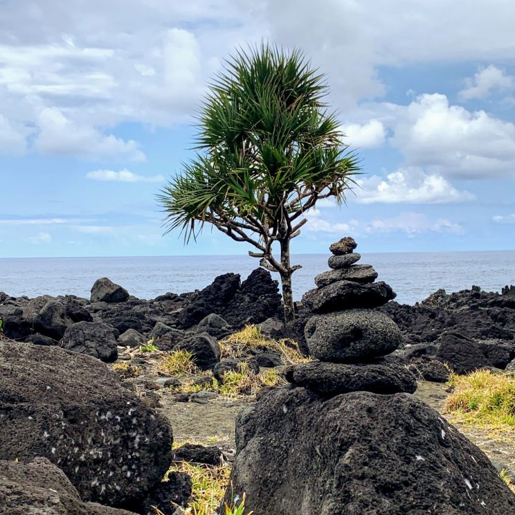 A tree growing at the black beach at the lava flow of 1977