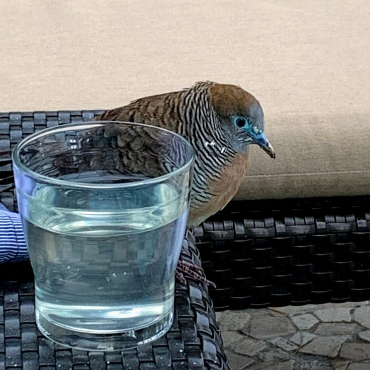 A friendly bird near a water glass