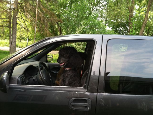 Merlin, a black dog, in the passenger seat of a car